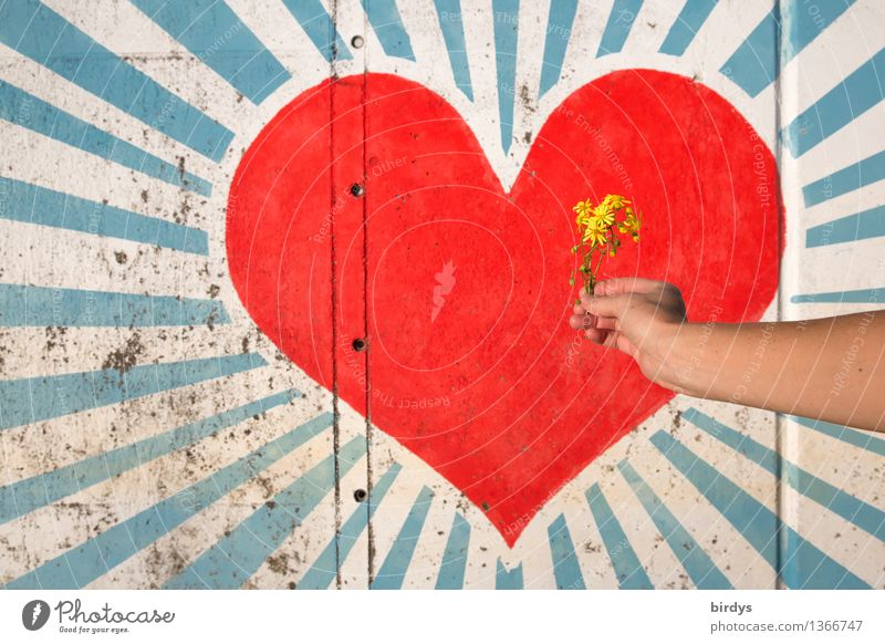Human being Youth (Young adults) Beautiful Hand Flower Red 18 - 30 years Adults Blossom Love Graffiti Happy Art Friendship Esthetic Arm