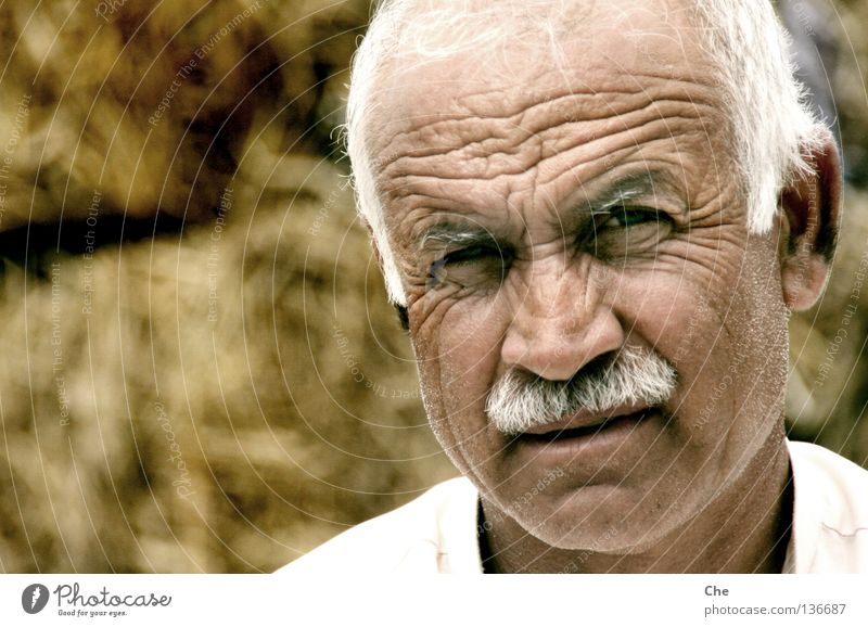 Man White Senior citizen Head Face Asia Good Wrinkles Human being Grandfather Retirement Know Smart Experience Wisdom Erudite
