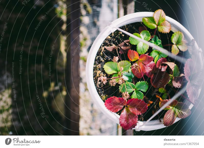 strawberry pot Nature Plant Beautiful Flower Joy Life Autumn Grass Feminine Style Playing Lifestyle Garden Feasts & Celebrations Moody Design
