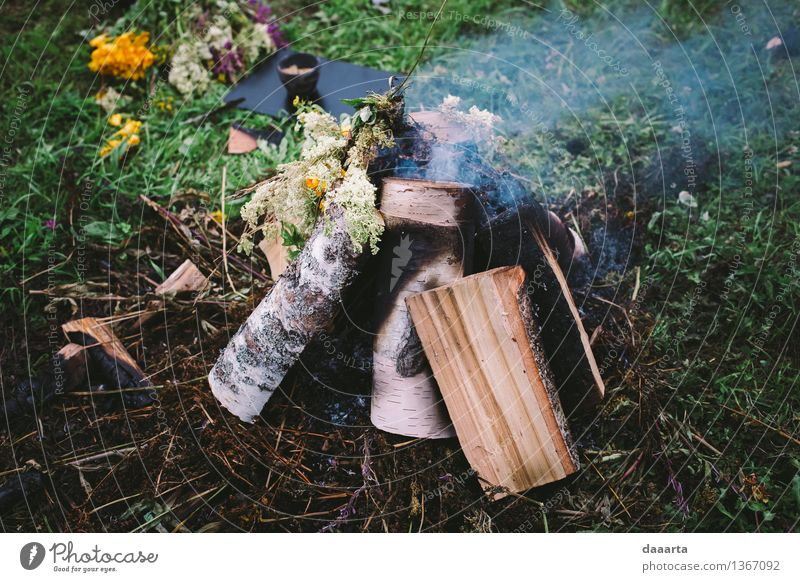 fire Nature Plant Summer Tree Flower Joy Life Grass Style Playing Wood Lifestyle Garden Feasts & Celebrations Freedom Moody