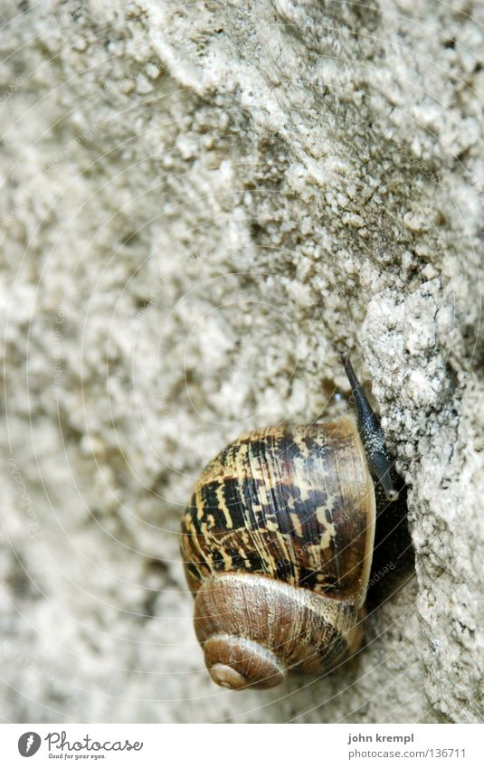 it's a long way to the top Snail Gray Brown Upward Go up Effort Complex Snail shell Pattern Circle Cemetery Tombstone Stone cimitero acattolico di roma