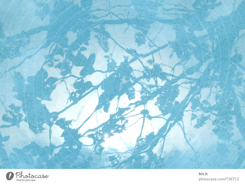 JAPANESE WATERS Sky Leaf Dark Bright Blue Azure blue Turquoise Background picture Drape Branch Water Shadow Shadow play Colour photo Exterior shot Detail