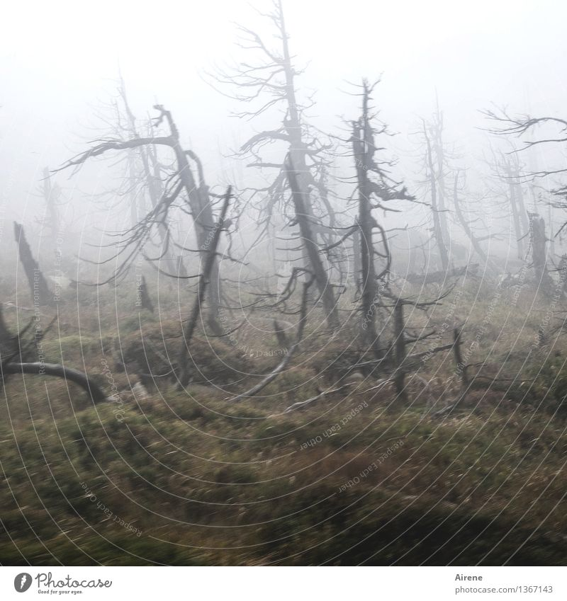 shapes Landscape Weather Bad weather Fog Tree Tree stump Forest Mountain Brocken Harz Ghosts & Spectres  Threat Dark Creepy Wild Gray Fear Dangerous Bizarre