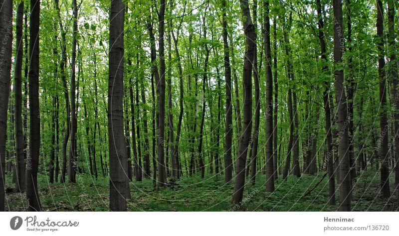 Green Tree Leaf Dark Forest Spring Closed Tree trunk Tree bark Deciduous tree Undergrowth