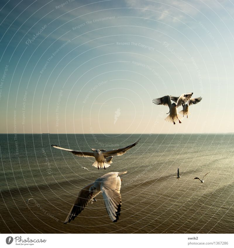 armada Environment Nature Landscape Water Sky Horizon Climate Beautiful weather Baltic Sea Bird Seagull Flock Flying Together Maritime Moody Many Judder