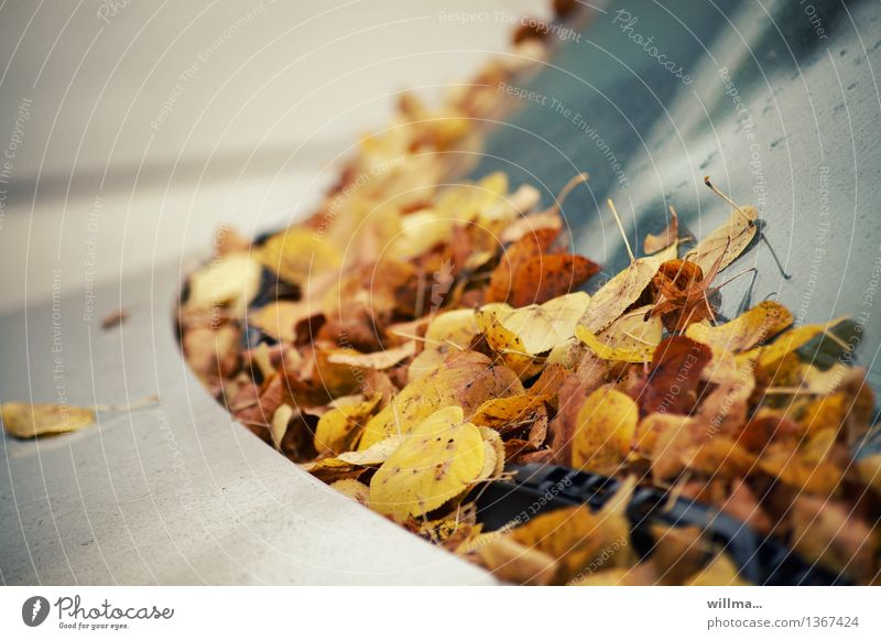 autumn ticket Autumn Autumn leaves Leaf Windscreen Car Parking Windscreen wiper Brown Yellow Silver Autumnal leaf fall Colour photo Exterior shot Deserted