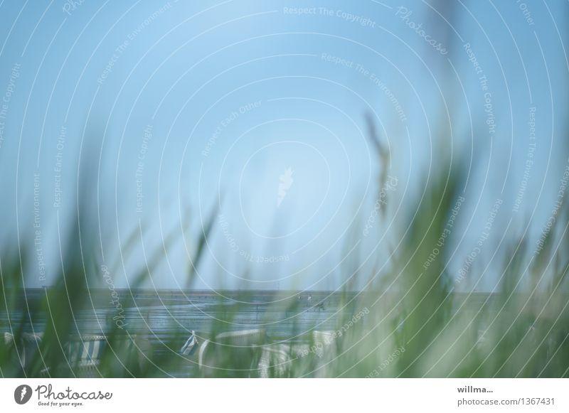 Blue Green Ocean Beach Coast Cloudless sky North Sea Beach chair Low tide Marram grass