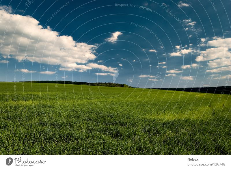 green and blue... Agriculture Field Green Landscape Nature Picturesque Deserted Sky blue Wide angle Central perspective Clouds in the sky Beautiful weather