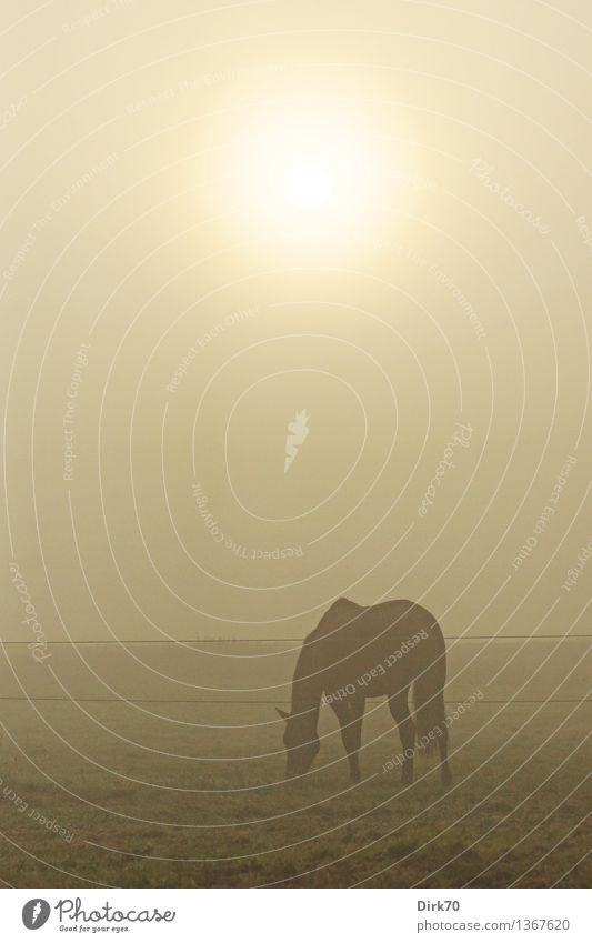 Sky Nature Summer Sun Loneliness Calm Animal Dark Autumn Meadow Grass Natural Moody Contentment Field Fog
