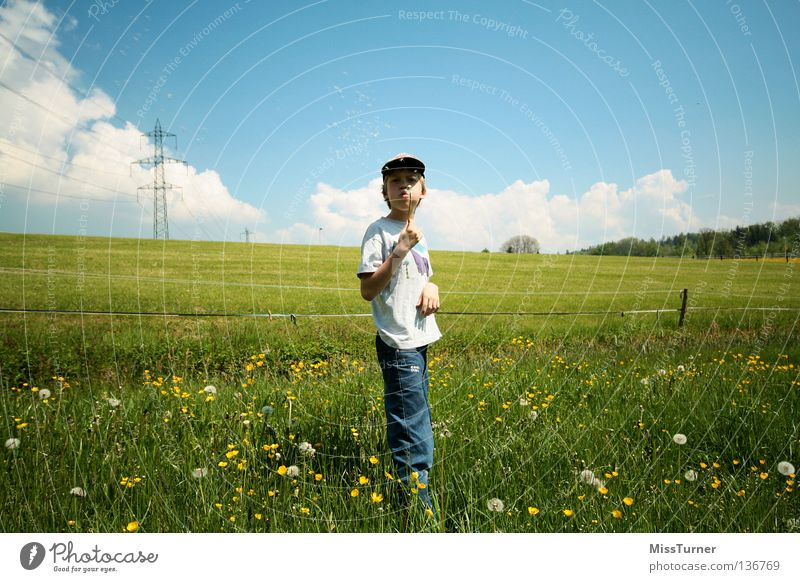 blow Playing Child Masculine Boy (child) Infancy 1 Human being Nature Landscape Sky Clouds Spring Flower Grass Meadow Field T-shirt Jeans Cap Blossoming