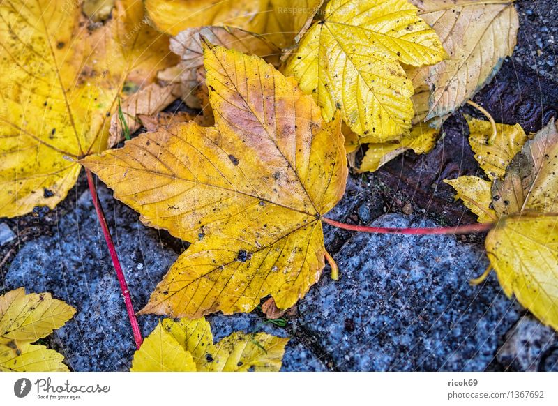 autumn leaves Nature Plant Autumn Climate Leaf Street Lanes & trails Blue Yellow Red Moody pavement Colour Orange Seasons Autumn leaves Colour photo