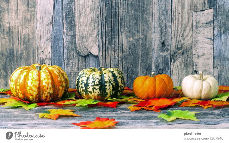 Pumpkin Family Food Vegetable Nutrition Eating Lunch Vegetarian diet Diet Healthy Healthy Eating Decoration Table Kitchen Restaurant Thanksgiving Hallowe'en