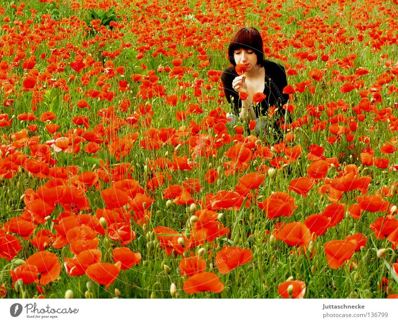 Summer! Good morning Poppy Corn poppy Field Red Flower Recently Woman Crouch To enjoy Odor Dreamily Middle Romance amid Nature Juttas snail Poppy field