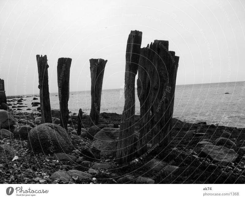five Ocean Coast Wood Black White Baltic Sea