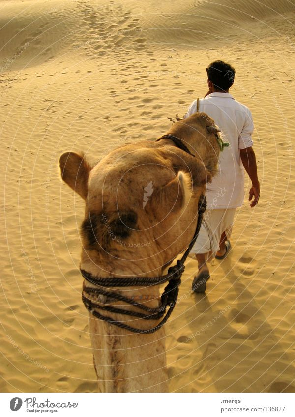 Human being Man White Summer Yellow Sand Hiking Desert Hot Dry India Nomade Equestrian sports Camel Caravan Ride