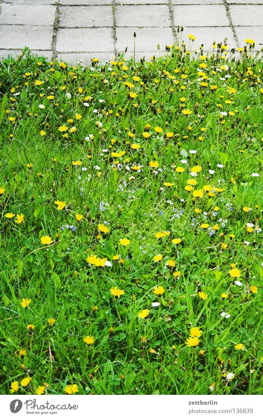 Green Meadow Grass Dandelion Sidewalk Boredom Traffic infrastructure Daisy Paving tiles Saxony-Anhalt Green space