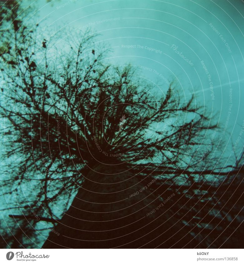 Tree Leaf Environment Dark Cold Autumn Dangerous Beautiful weather Square Tree trunk Bizarre Concern Cloudless sky Remorse Edge of the forest Holga