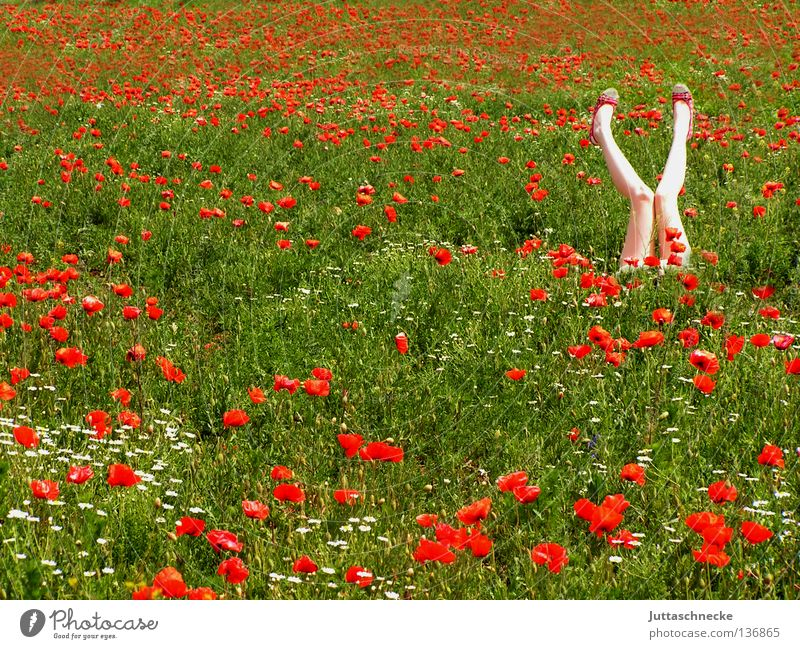 Woman Nature Red Summer Flower Joy Legs Dream Healthy Field Romance Middle Poppy Human being Gymnastics Poppy field