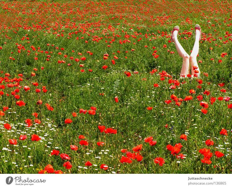 yoga Poppy Corn poppy Field Red Flower Summer Recently Woman Dream Middle Romance Go crazy Healthy Joy amid Nature Gymnastics Legs X up into the air