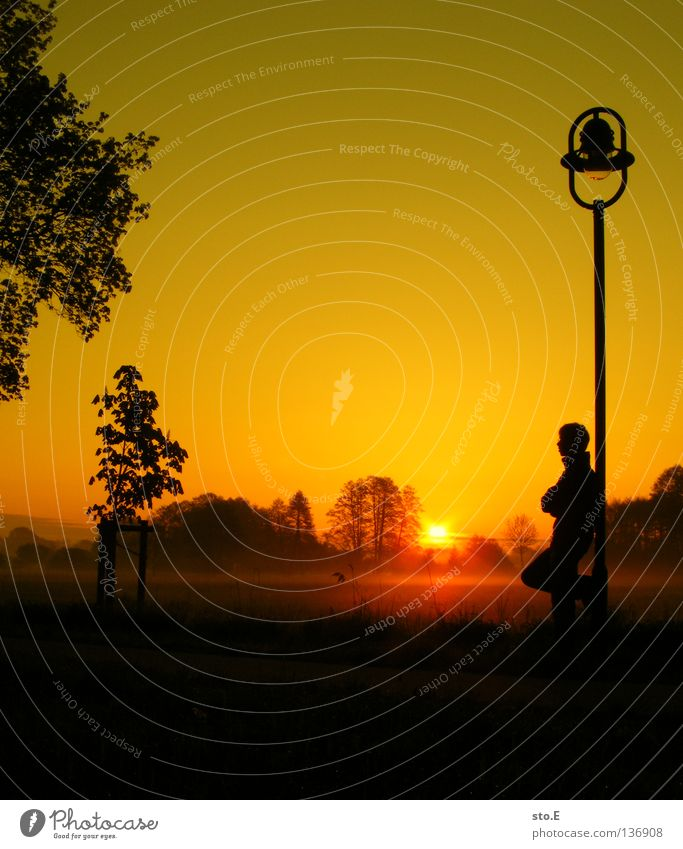 early morning | early riser Fellow Man Masculine Youth (Young adults) Moody Posture Lamp Lantern Lamp post Meadow Field Far-off places Sunrise Morning Tree
