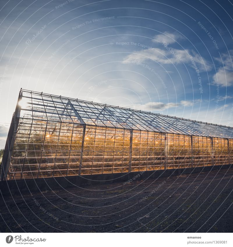 glass house Agriculture Forestry Industry Technology Advancement Future Energy industry Renewable energy Solar Power Sky Climate Warmth Plant Agricultural crop