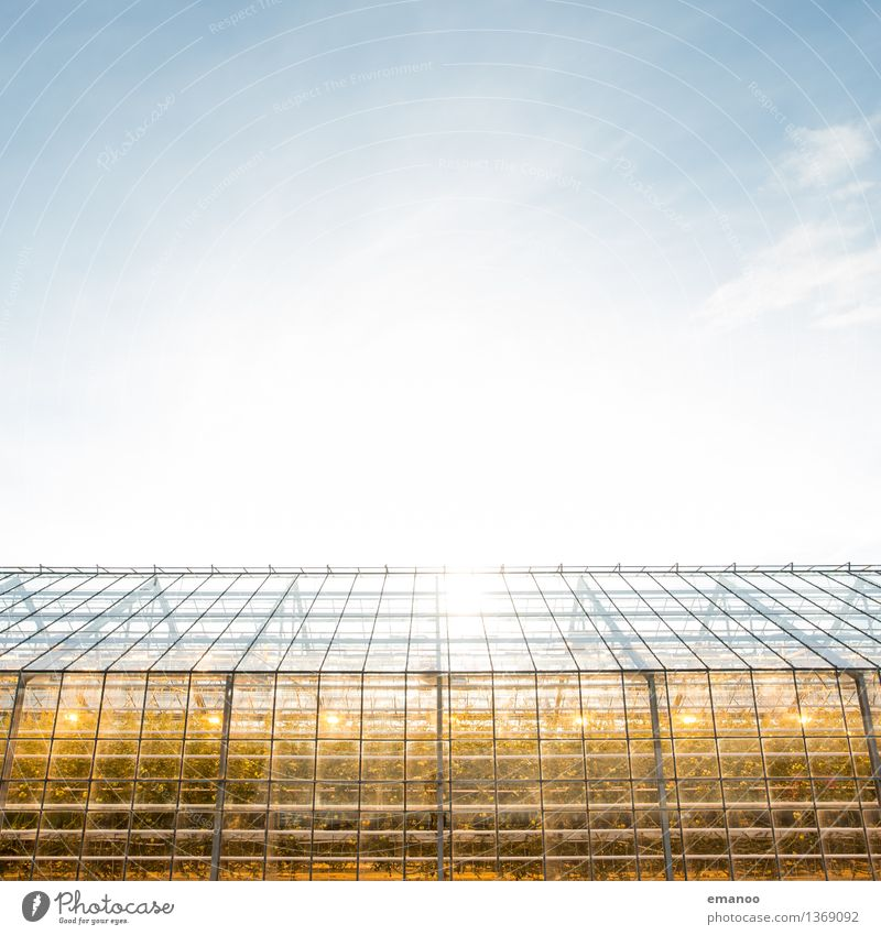Sky Nature Plant House (Residential Structure) Window Environment Warmth Architecture Building Bright Weather Energy industry Growth Illuminate Climate Industry