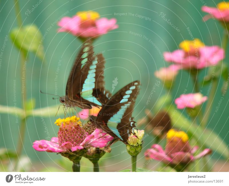 Flower Blossom Asia Delicate Butterfly China Smooth Pollen