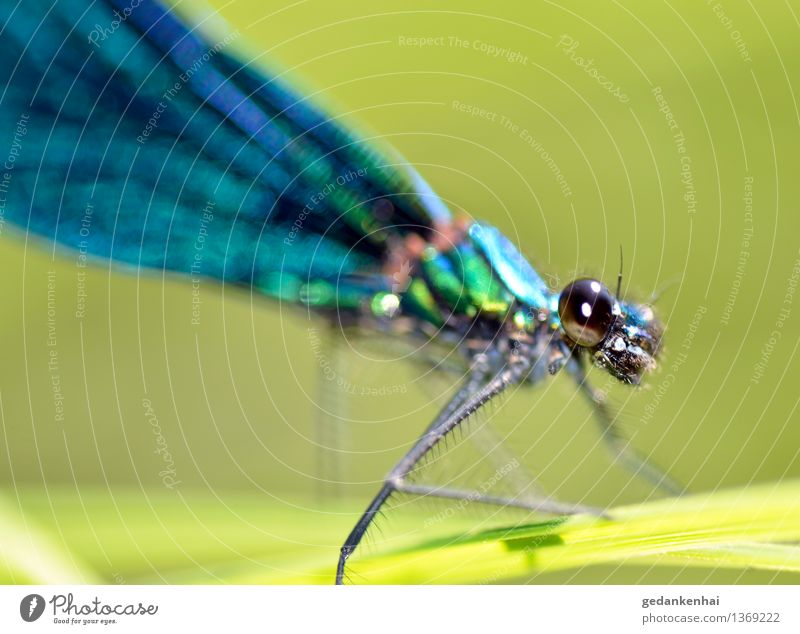 dragonfly Grass Animal Wing Observe Flying Crawl Dragonfly Insect macro Eyes Green Dazzling change Colour photo Exterior shot Close-up Day Animal portrait