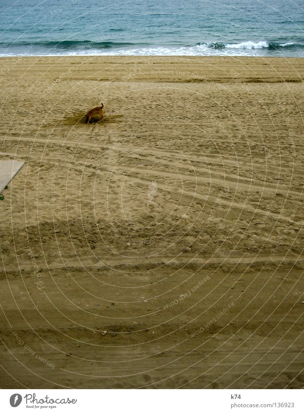 Water Ocean Beach Dog Sand Line Search Corner Tracks Bottle Hollow Odor Mammal Interest Surf Find