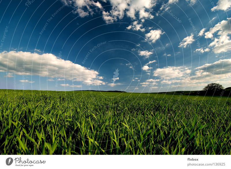 Nature Green Landscape Horizon Field Beautiful weather Agriculture Blue Picturesque Sky blue Clouds in the sky Cloud formation Cloud field Wisp of cloud