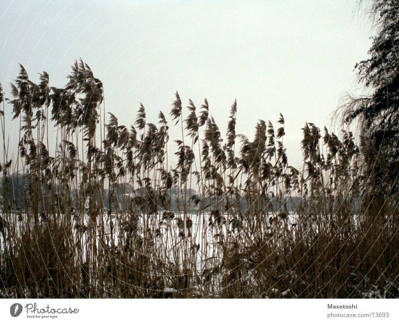 Nature Water Old Landscape Bushes Vantage point Alster
