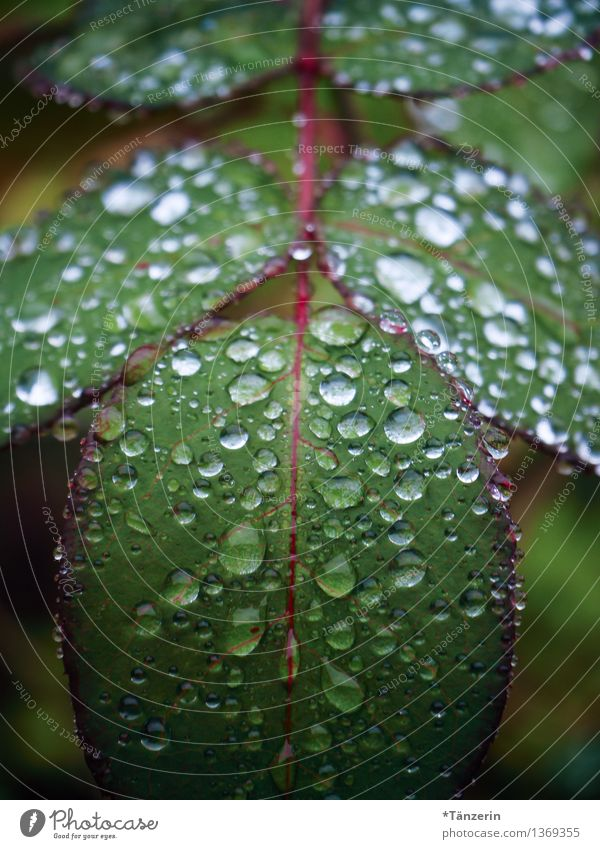 Plant Green Beautiful Flower Landscape Leaf Calm Cold Environment Sadness Autumn Natural Garden Rain Weather Fresh