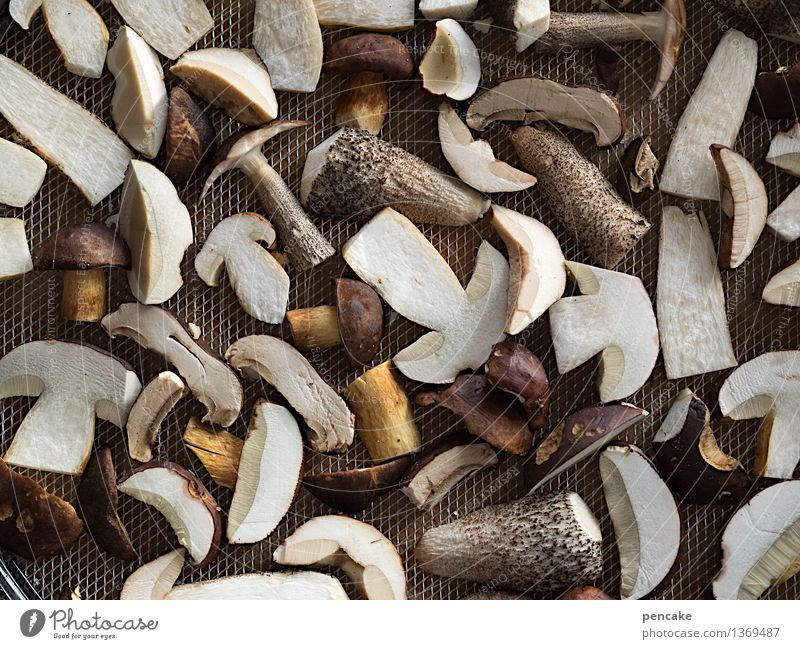 winterproof Food Nature Autumn Winter Wild plant To enjoy Dry Healthy Concern Thrifty Survive Mushroom Boletus Canned Net Airy Foraging Supply Winter stock
