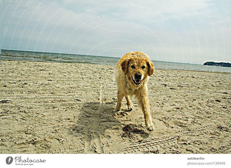 Summer Beach Vacation & Travel Relaxation Dog Sand Coast Horizon Trip Places Baltic Sea Mammal Mecklenburg-Western Pomerania Golden Retriever