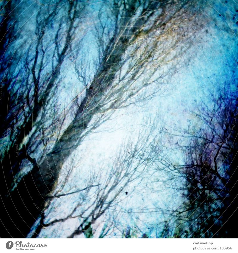 Sky Tree Blue Winter Leaf Forest Cold Autumn Branch Autumn leaves Greenhouse Wood flour