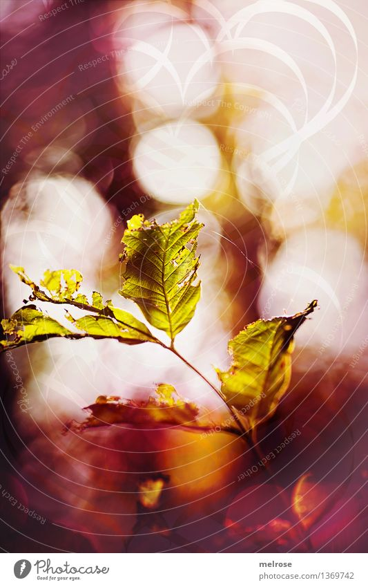 Nature City Green Beautiful White Leaf Autumn Movement Style Art Moody Glittering Design Air Field Illuminate