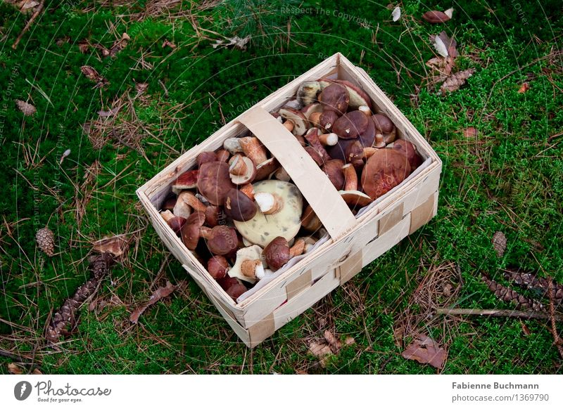 Off to the basket Plant Autumn Grass Moss Wild plant Mushroom Accumulate Difference Basket Carpet of moss Automn wood Accumulation Edible Nature Forest Brown