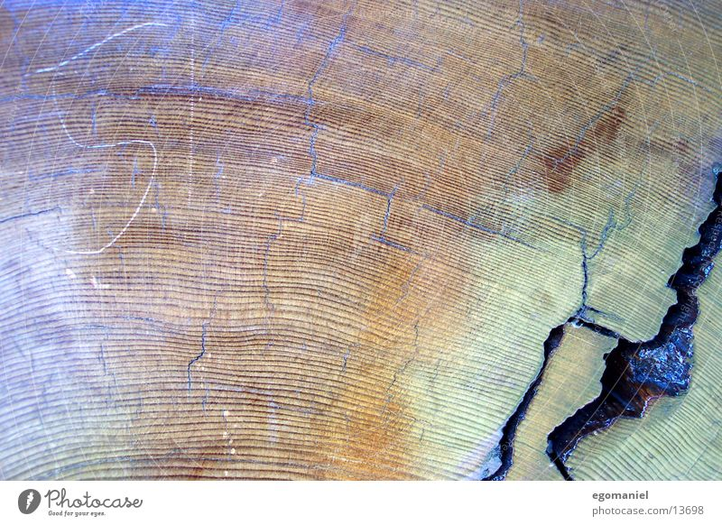 Nature Tree Life Wood Circle Growth Redwood