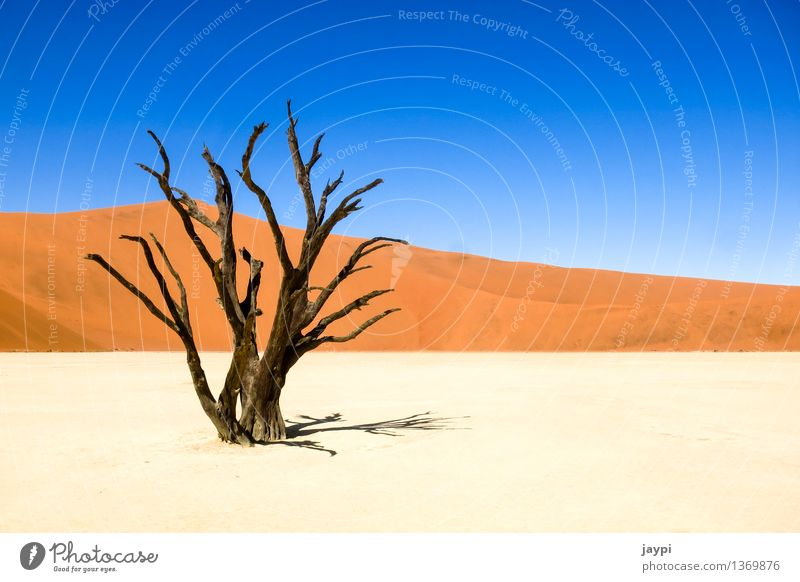 Nature Plant Blue White Tree Red Landscape Black Death Sand Branch Hill Tree trunk Dry Desert Cloudless sky