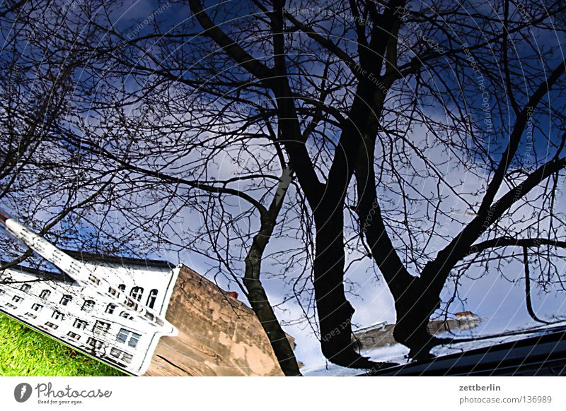 real Really Tree Sky blue House (Residential Structure) Story Wall (building) Town Town house (City: Block of flats) Crazy Vaulting Reflection Architecture