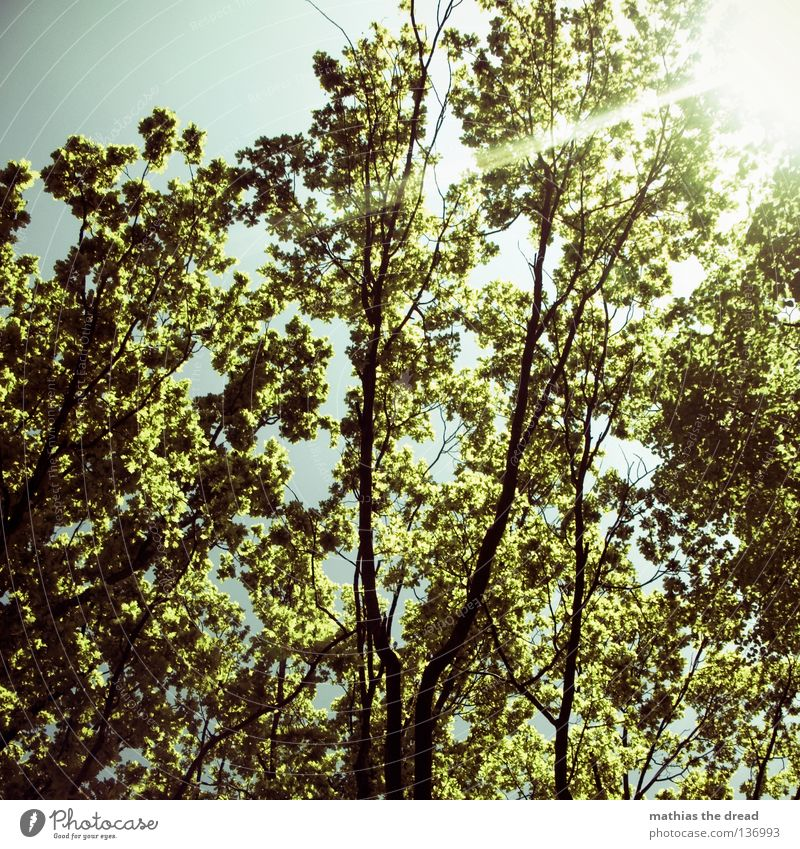 tree of life Tree Plant Green Living thing Biology Organic Photosynthesis Park Treetop Leaf Leaf canopy Thin Back-light Sunbeam Radiation Beautiful weather