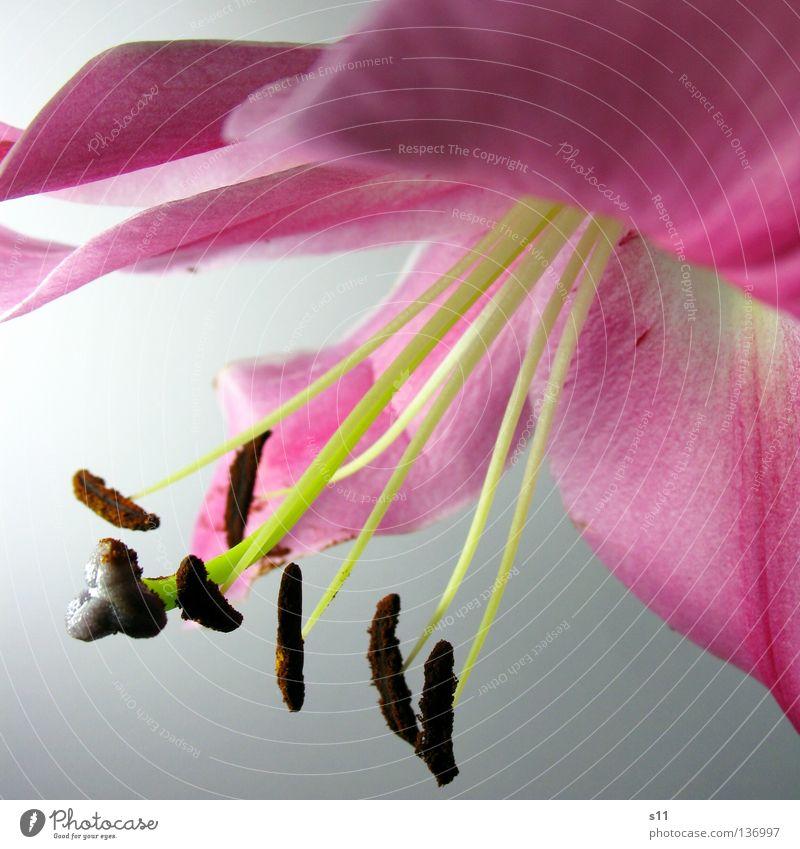 Nature White Green Beautiful Plant Summer Flower Blossom Waves Elegant Pink Fresh Corner Lady Noble Edge
