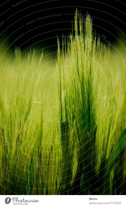 Green Plant Spring Field Food Environment Growth Protection Grain Agriculture Harvest Grain Agriculture Seed Ecological Organic farming