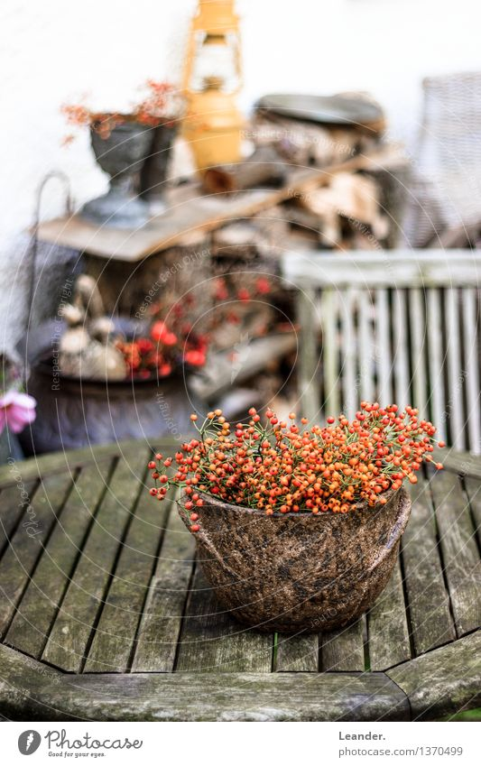 Decoration in the garden Environment Garden Esthetic Authentic Natural Brown Orange White Colour Idea Uniqueness Inspiration Naked Nature Rawanberry Still Life
