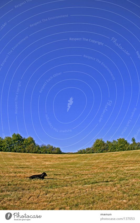 Sky Green Summer Calm Animal Yellow Far-off places Relaxation Meadow Grass Spring Freedom Dog Warmth Air Trust