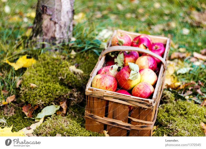 Apples I Environment Nature Plant Garden Meadow Forest Decoration Fitness Feeding Happy Idea Idyll Uniqueness Inspiration apples Autumn Harvest Thanksgiving