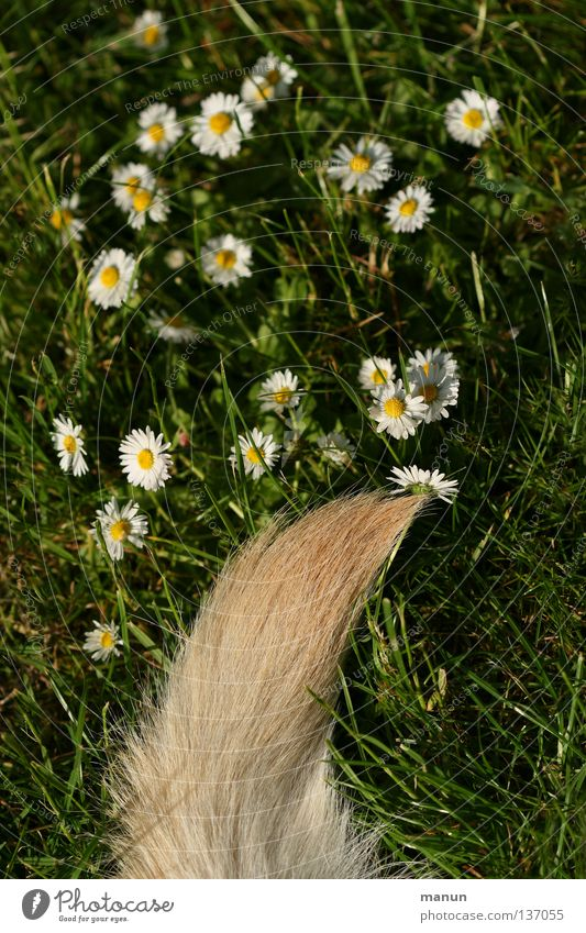 Green Summer Joy Calm Animal Yellow Meadow Grass Spring Garden Dog Blonde Fresh Pelt Daisy Tails