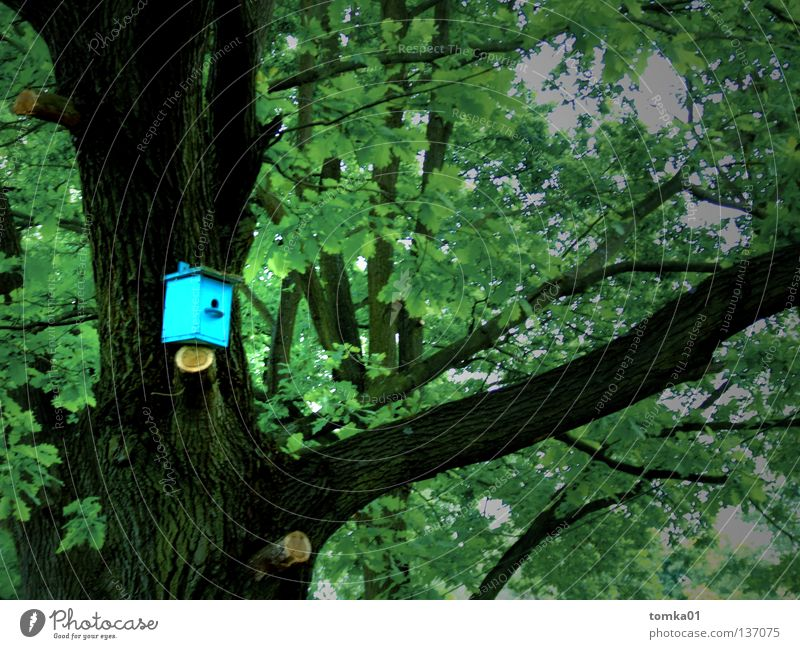 Nature Old Green Tree Leaf House (Residential Structure) Bird Room Flat (apartment) Free New Illuminate Hotel Nest Oak tree Roof