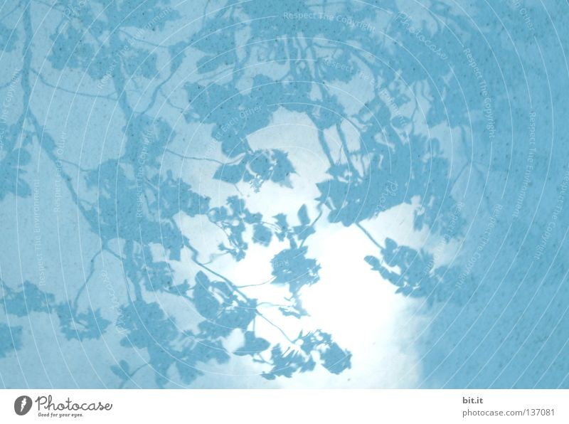 SKY OVER JAPAN Sky Tree Leaf Cloth Bright Kitsch Blue Azure blue Turquoise Background picture Drape Branch Shadow play Water Cloth pattern Colour photo Detail