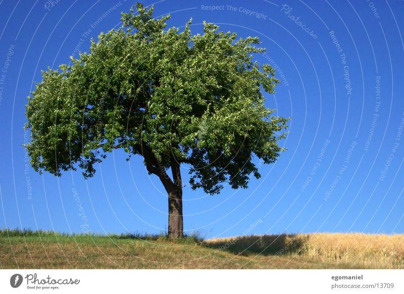 Sky Tree Green Summer Leaf Meadow Field